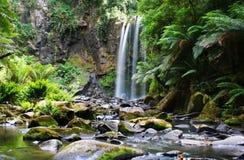 Wasserfall über Farn-abgedeckten Felsen Stockbilder