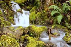 Wasserfall über moosigen Felsen Stockfoto