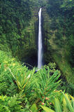 Wasserfall in Akaka fällt Nationalpark, Hawaii Lizenzfreies Stockfoto