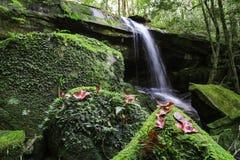 Wasserfall bei Phukradueng lizenzfreie stockbilder