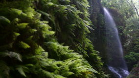 Wasserfall ` das Linden `, in der Insel von La Palma, Kanarische Inseln, Spanien stock video