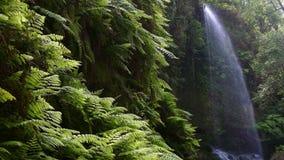 Wasserfall ` das Linden `, in der Insel von La Palma, Kanarische Inseln, Spanien stock video footage