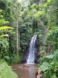 Wasserfall an den Wasser-Gärten von Vaipahi, Tahiti, Französisch-Polynesien stockbild