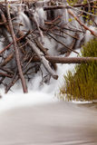 Wasserfall, der über hölzernen Rückstand der Biberverdammung kaskadiert Stockfotografie