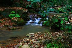 Wasserfall in der Waldherbstansicht stockbilder