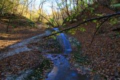Wasserfall in der Waldherbstansicht stockfoto