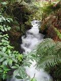 Wasserfall in der Wildnis Stockfotografie