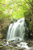 Wasserfall des neuen Grüns Lizenzfreie Stockfotografie