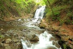 Wasserfall des neuen Grüns Stockfotografie