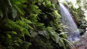 Wasserfall die Linden, in der Insel von La Palma, Kanarische Inseln, Spanien Langsame Bewegung stock video