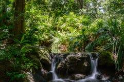 Wasserfall durch das Holz Lizenzfreies Stockfoto
