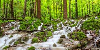 Wasserfall in einem Frühlings-Wald Stockbilder