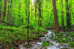 Wasserfall in einem Frühlings-Wald Stockfotos