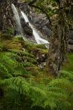 Wasserfall in einem keltischen Regenwald Lizenzfreie Stockbilder
