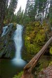 Wasserfall in einem Kiefern-Wald Lizenzfreie Stockbilder