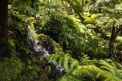 Wasserfall in einem schönen Garten bei Monte über Funchal Madeira lizenzfreie stockbilder