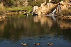 Wasserfall in einem Teich Stockbilder