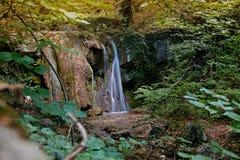 Wasserfall in einem Waldfluß Lizenzfreies Stockbild