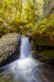 Wasserfall entlang Gorton-Nebenfluss am Nachmittag in Oregon Lizenzfreie Stockfotos