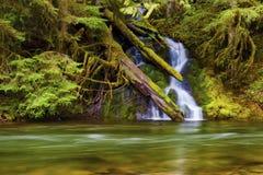 Wasserfall entlang Salmon River stockfotos
