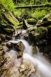 Wasserfall, Felsen und alter Baum im Wald Stockfotos