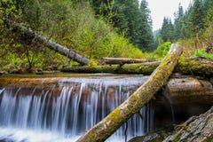 Wasserfall gemachte Form ein Baum Lizenzfreie Stockfotos