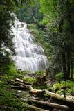 Wasserfall gestaltet durch Wald stockbilder