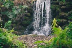 Wasserfall-Hintergrund Stockfotos