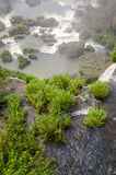 Wasserfall Iguacu Stockfotos