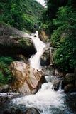 Wasserfall im üppigen grünen Wald Lizenzfreie Stockfotos