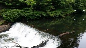 Wasserfall im Bronx lizenzfreie stockfotografie
