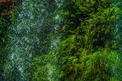 Wasserfall im Dschungel war dicht stockfotos