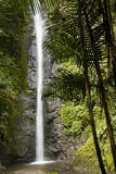 Wasserfall im Ecuador Stockfoto