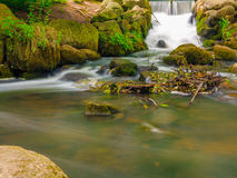 Wasserfall im grünen Strom des Holzes Waldin Oliva-Park Gdansk Stockfotos