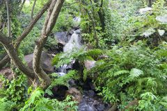 Wasserfall im grünen Wald Stockfotografie