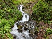 Wasserfall im grünen Wald mit Bewegungsunschärfeeffekt Lizenzfreie Stockfotos