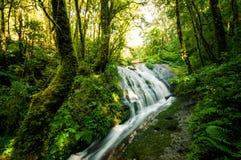 Wasserfall im Hügelimmergrünwald stockfoto