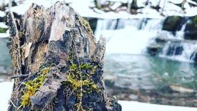 Wasserfall im Hintergrund stockfoto