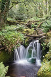 Wasserfall im Holz Lizenzfreies Stockbild