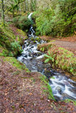 Wasserfall im moosigen Waldland Lizenzfreie Stockfotografie
