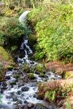 Wasserfall im moosigen Waldland Lizenzfreie Stockfotos