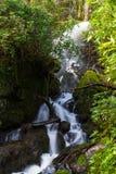 Wasserfall im moosigen Waldland Stockfoto