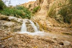 Wasserfall im Naturreservat en Gedi und im Nationalpark stockbild