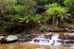 Wasserfall im Regenwald stockfotografie
