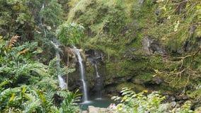 Wasserfall im Regenwald auf Straße zu Hana stock footage