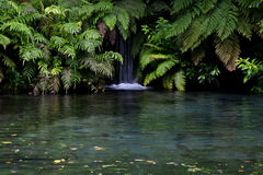 Wasserfall im Regenwald, Neuseeland Lizenzfreies Stockfoto