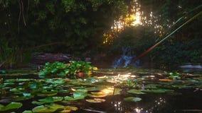Wasserfall im schönen Garten stock video