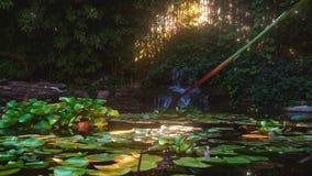 Wasserfall im schönen Garten stock footage