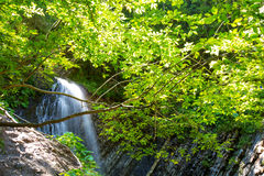 Wasserfall im tiefen Mooswald, sauberes ADN frisch in Karpaten, Ukraine Stockfoto