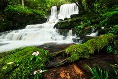Wasserfall im tiefen Wald Stockfoto